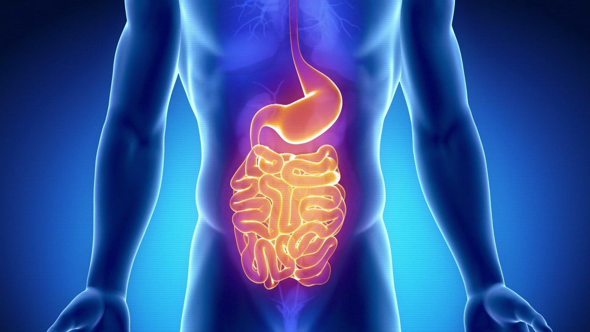 Alguna vez has escuchado sobre extremos Acelerar metabolismo Muy bien sobre eso