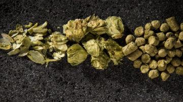 Lupulo-Cerveza