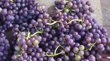 Italian Grape Ale1
