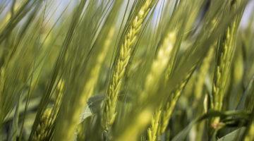 Heinken Agricultura Inteligente