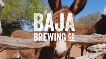 Baja Brewing Lolo Santuario